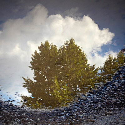 Reflection of tree and sky in puddle - p4297768 by Alex Holland