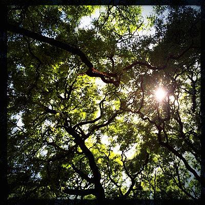 Tree tops with sunshine - p567m1090800 by GINA VAN HOOF
