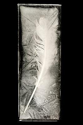 Frozen feather - p451m908129 by Anja Weber-Decker