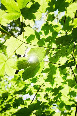 Blätterdach - p464m2186074 von Elektrons 08