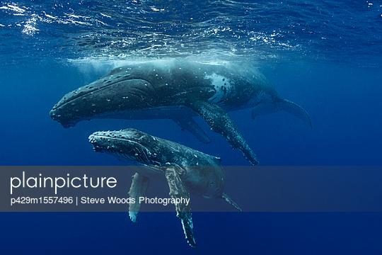 p429m1557496 von Steve Woods Photography