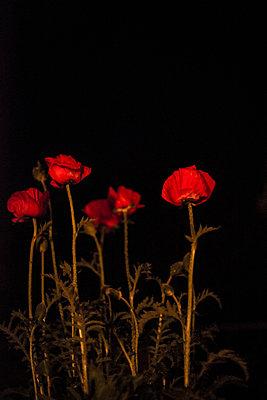 Blumen bei Nacht - p1509m2116772 von Romy Rolletschke