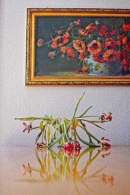 Alter Tulpenstrauß - p550m901834 von Thomas Franz