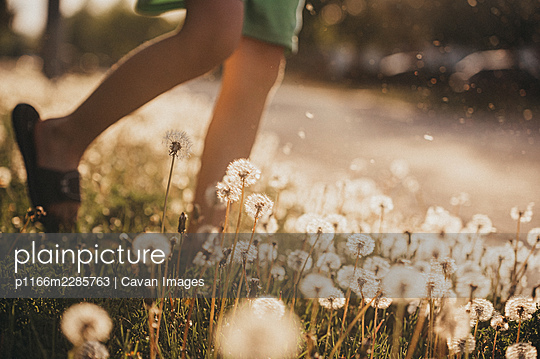 Child's legs walking through field of dandelion flowers on sunny day. - p1166m2285763 by Cavan Images