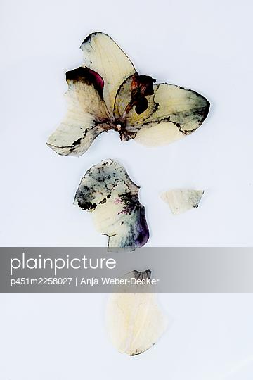 Orchid - p451m2258027 by Anja Weber-Decker