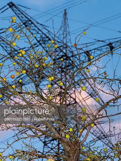 Apple tree with pylon in the background - p801m2257691 by Robert Pola