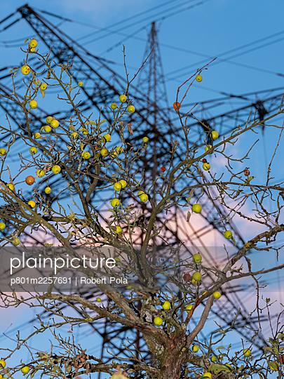 Apfelbaum mit Strommast im Hintergrund - p801m2257691 von Robert Pola