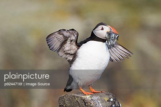 p9244716f von Image Source