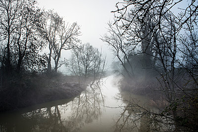 Trees on Arun river in the morning fog  - p1516m2158255 by Philip Bedford