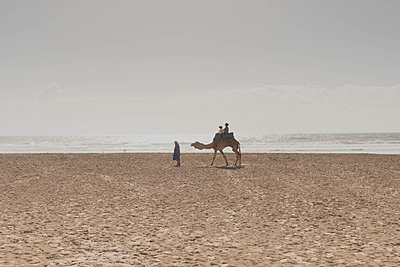 Riding camels on the beach - p445m1552771 by Marie Docher
