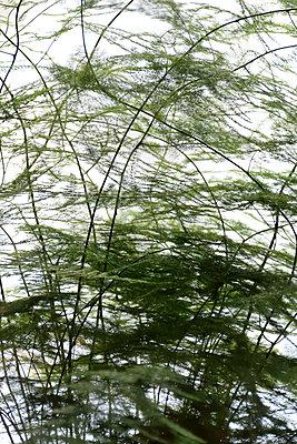 Baum - p1235m1526011 by Karoliina Norontaus