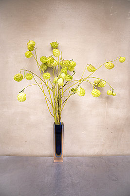 Vase with Chinese lanterns - p1640m2246058 by Holly & John