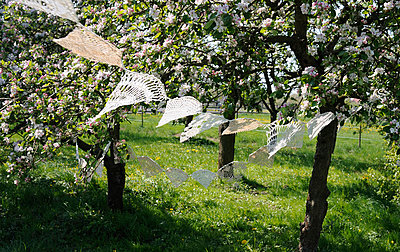 Germany, Hamburg, parts of old crochet tablecloths hanging between blossoming apple trees - p300m1014965 by Gianna Schade