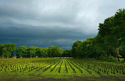 View of tree nursery with thunderstorm overhead - p429m1047320 by Mischa Keijser