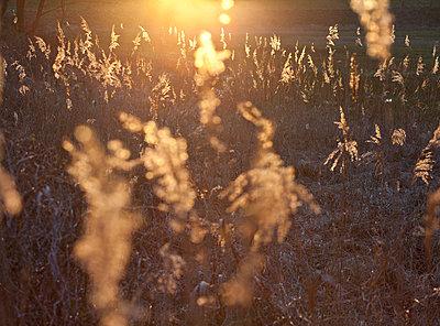 Abendlicht - p781m1064333 von Angela Franke