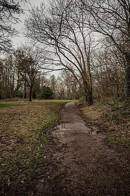 Muddy path leading to woods - p1047m1516410 by Sally Mundy