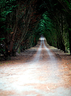 View along a tree lined country road. - p1100m1482341 by Mint Images