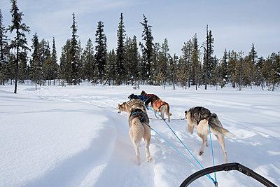 Rear view of huskies pulling sled through snow - p1166m1485601 by Cavan Images