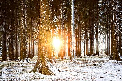 Erster Schnee im Wald - p1168m1525879 von Thomas Günther