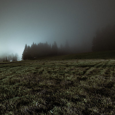 View of field and grove in the fog at twilight - p1624m2195968 by Gabriela Torres Ruiz