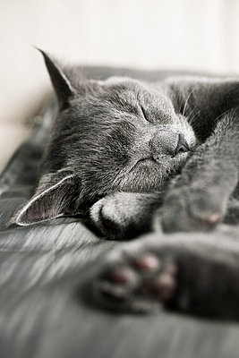 Sleeping cat - p8690037 by Dombrowski