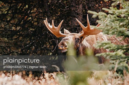 p1455m2203774 by Ingmar Wein