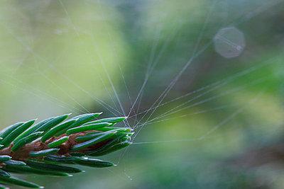 Spinnfäden - p2351739 von KuS