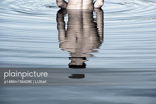 Im Wasser stehen - p1486m1564286 von LUXart