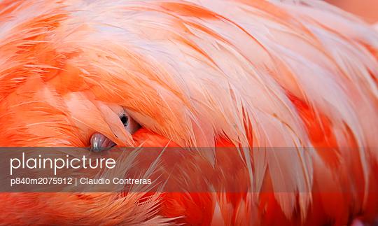 p840m2075912 von Claudio Contreras