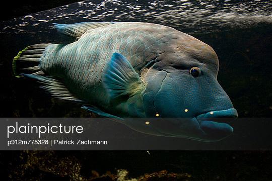 p912m775328 von Patrick Zachmann