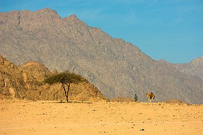 Desert landscape Sinai Egypt - p312m1076670f by Lars Thulin