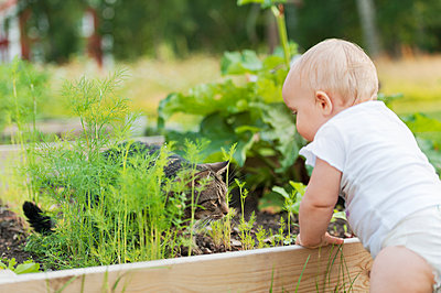 Baby boy at vegetable patch - p312m2050555 by Rebecca Wallin