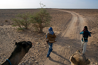 Hiking camel in the Western Sahara - p589m892171 by Thierry Beauvir