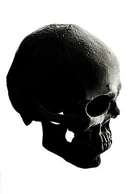 Skull - p971m1225688 by Reilika Landen