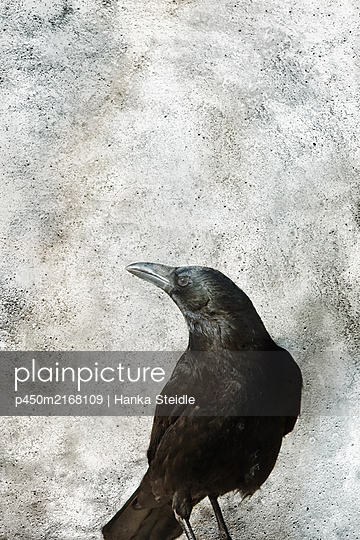 Crow - p450m2168109 by Hanka Steidle