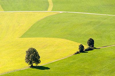 Wiesenlandschaft im Allgäu - p1079m891101 von Ulrich Mertens
