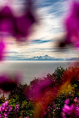 View through flowers onto sea and mountain range - p1455m2204512 by Ingmar Wein
