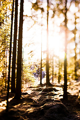 Forest against the light - p5755649 by Peter Rutherhagen