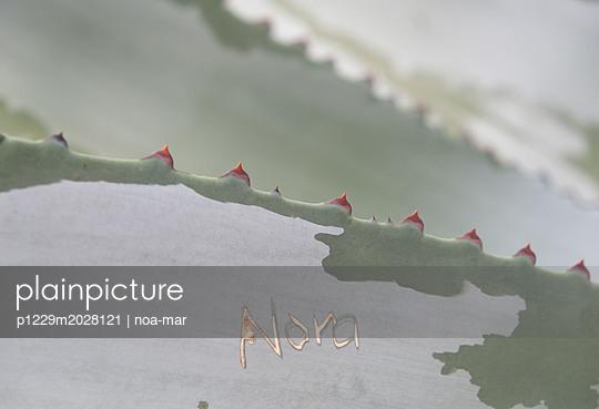 Agave - p1229m2028121 von noa-mar