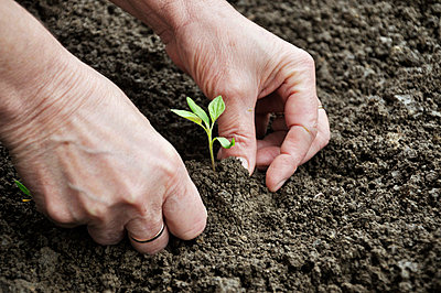 Planting a seedling - p5770337 by Mihaela Ninic