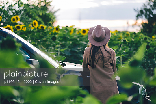 Rear view of woman looking at sunflowers while standing by car at farm - p1166m2112003 by Cavan Images