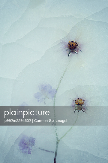 p992m2294602 by Carmen Spitznagel