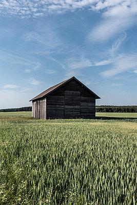 Scheune in einem Roggenfeld - p354m1467163 von Andreas Süss