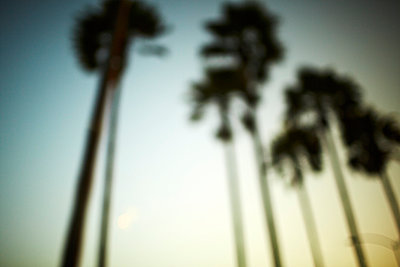 Palm trees - p584m960045 by ballyscanlon