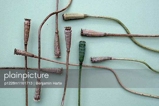 Floral arrangement - p1228m1161713 by Benjamin Harte
