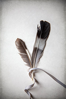 Ribbon wrapped around two feathers  - p1248m2287875 by miguel sobreira
