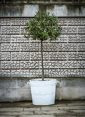 Potted Tree - p1256m2098967 by Sandra Jordan