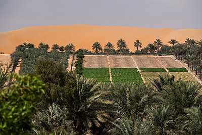 Vegetable fields in oasis  - p280m1137343 by victor s. brigola