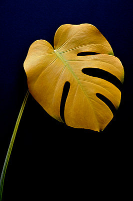 Yellow leaf - p876m716250 by ganguin