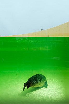 Seal - p1132m1039994 by Mischa Keijser